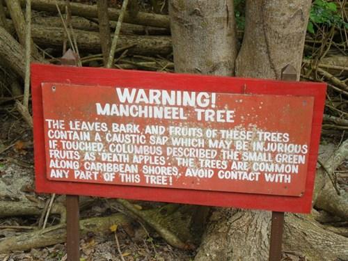 Người ta phải gắn những tấm biển cảnh báo dưới thân cây để du khách lưu ý