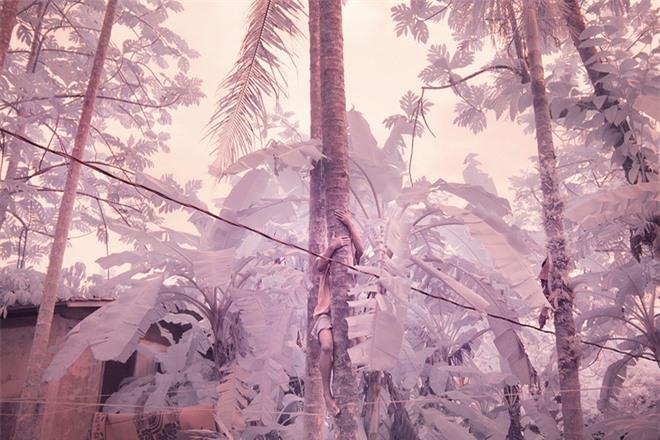 Thiên nhiên kỳ lạ qua đôi mắt của người dân Đảo Mù màu: Rừng màu hồng, biển màu xám - Ảnh 2.