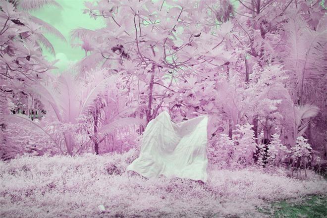 Thiên nhiên kỳ lạ qua đôi mắt của người dân Đảo Mù màu: Rừng màu hồng, biển màu xám - Ảnh 5.