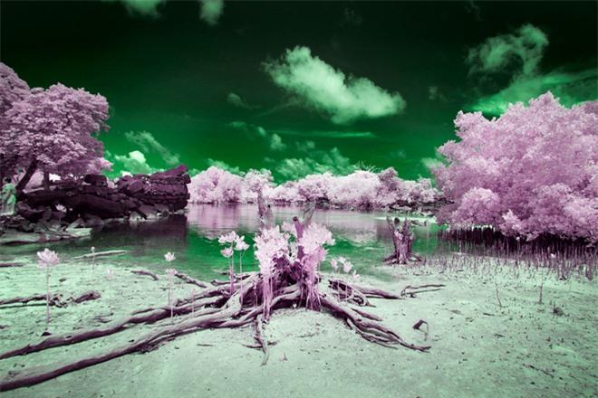 Thiên nhiên kỳ lạ qua đôi mắt của người dân Đảo Mù màu: Rừng màu hồng, biển màu xám - Ảnh 8.
