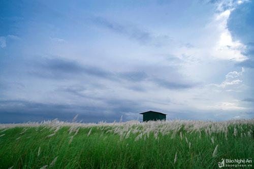 Chỉ một quãng di chuyển không xa, bạn sẽ choáng ngợp trước khung cảnh thiên nhiên khoáng đạt, với cánh đồng lau trắng đầy thơ mộng dưới nền trời xanh ngắt. Ảnh: Lê Thắng