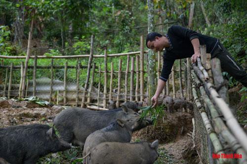 Với giống lợn lòi, Nam chủ yếu bán con giống. Lợn giống sẽ được bán với giá 140 nghìn đồng/1kg. Ngoài ra, những lứa lợn thương phẩm cũng được nhiều khách hàng yêu thích,theo đơn đặt hàng lợn thương phẩm sau khi làm sạch sẽ được bán với giá 160 nghìn đồng/1kg. Mỗi năm, mô hình nuôi lợn lòi cũng đem về cho anh từ 40 – 60 triệu đồng.