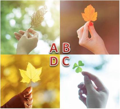 Bạn chọn bức ảnh chiếc lá nào?