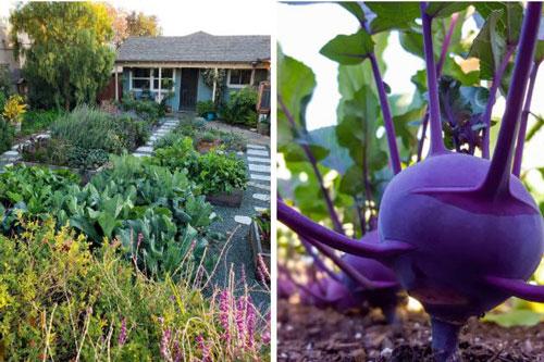 Khu vườn được thiết kế độc đáo với lối đi và những khung gỗ trồng rau quả sạch.