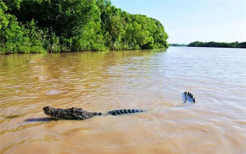 """Khám phá """"hòn đảo cá sấu"""" Ramee - nơi thách thức những kẻ gan dạ nhất thế giới"""