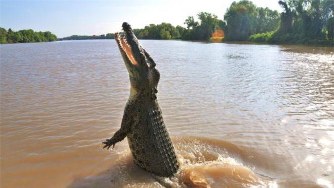 Salt-water-crocodile-678x381