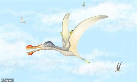 Chân dung loài thằn lằn bay mới được phát hiện
