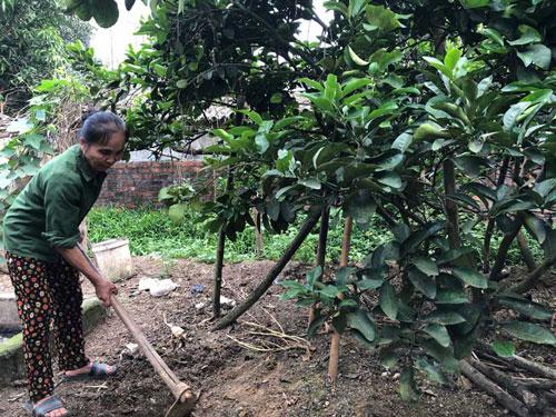 Hòa Bình: Nữ nông dân làm giàu từ mô hình phát triển kinh tế tổng hợp