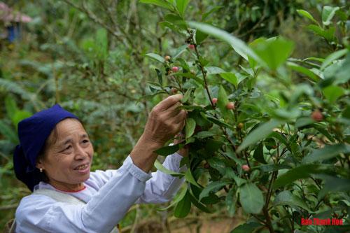 Bản Khuyn (xã Cổ Lũng), một vùng đồng bào người Thái sinh sống giáp ranh với tỉnh Hòa Bình, là một trong số ít những nơi đang còn lưu giữ lại những phương thức tạo nên men rượu cần truyền thống.