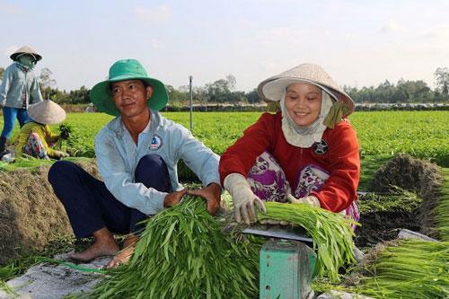 HTX Hòa Phát chủ động ứng dụng các giải pháp kỹ thuật trồng rau màu theo quy trình an toàn (Ảnh: Internet)