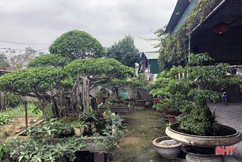 """Ở làng Đông Thái, xã Tùng Ảnh, vườn cây của gia đình ông Phan Văn Hồng được mệnh danh là """"khu vườn nhỏ, thế bonsai"""". Ông Hồng là người chơi cây cũng là người thường xuyên mua, bán và thẩm giá cây cảnh. Nhiều cây cảnh trong vườn được chính ông tự tay ươm, chiết trồng, tự mày mò học tạo dáng."""
