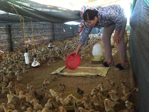 Hòa Bình: Thành công từ mô hình nuôi gà thả vườn