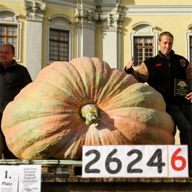 """Trầm trồ trước những loại rau quả """"siêu to, khổng lồ"""" nhất quả đất - Ảnh 3."""