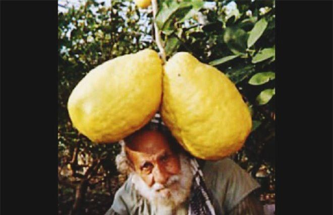 """Trầm trồ trước những loại rau quả """"siêu to, khổng lồ"""" nhất quả đất - Ảnh 4."""