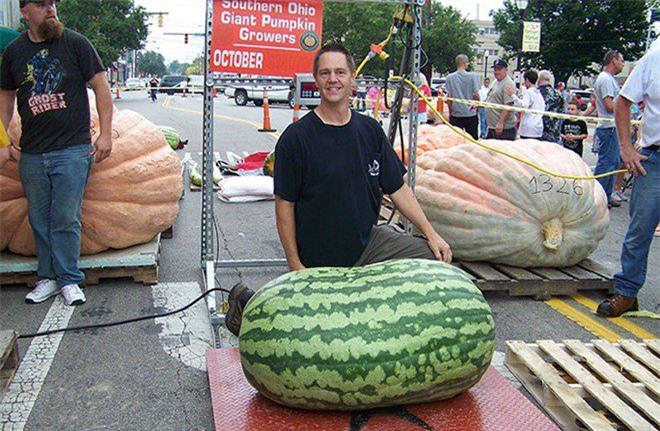 """Trầm trồ trước những loại rau quả """"siêu to, khổng lồ"""" nhất quả đất - Ảnh 6."""