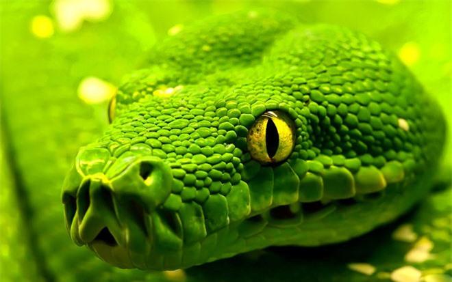 Vẻ đẹp mang sắc chồi non của rắn lục - 2