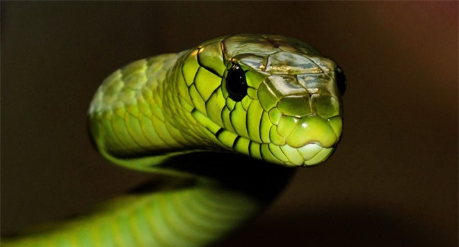 Vẻ đẹp mang sắc chồi non của rắn lục - 3