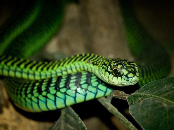 Vẻ đẹp mang sắc chồi non của rắn lục - 5