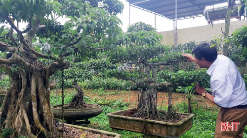 """Vườn của """"nghệ nhân"""" này có đủ loài cây cảnh như: Sanh, lộc vừng, tùng, bách"""