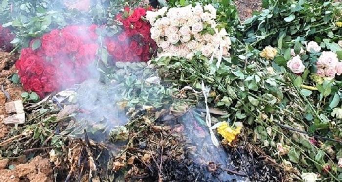 Hoa hồng Đà Lạt rớt giả thảm nhưng vẫn không có người mua nên người dân phải đau đớn cắt bỏ