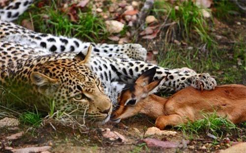 Ảnh đẹp: Mèo con trèo lên đầu chó - 9