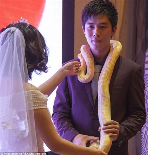 Lạ: Cô dâu, chú rể trao nhau đôi trăn sống khổng lồ thay nhẫn cưới - 3