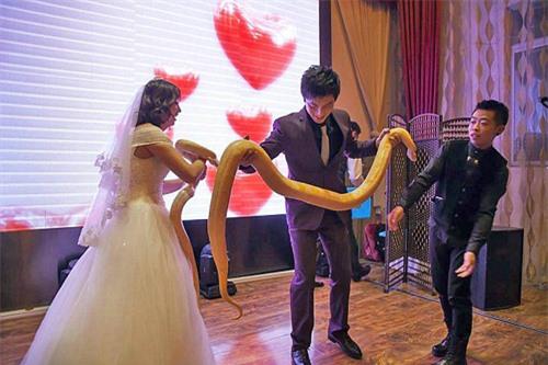 Lạ: Cô dâu, chú rể trao nhau đôi trăn sống khổng lồ thay nhẫn cưới - 4