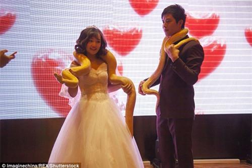 Lạ: Cô dâu, chú rể trao nhau đôi trăn sống khổng lồ thay nhẫn cưới - 5