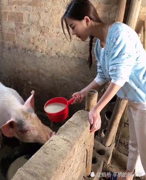 Hình ảnh cô gái cho lợn ăn