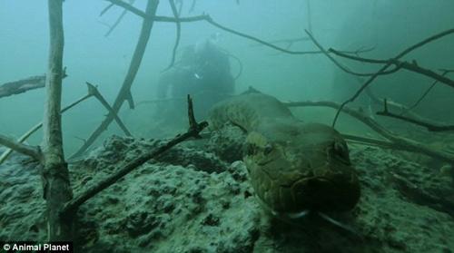 Jeremy Wade cùng đoàn làm phim tới sông Jeremy Wade để truy tìm quái vật giết người hàng loạt.