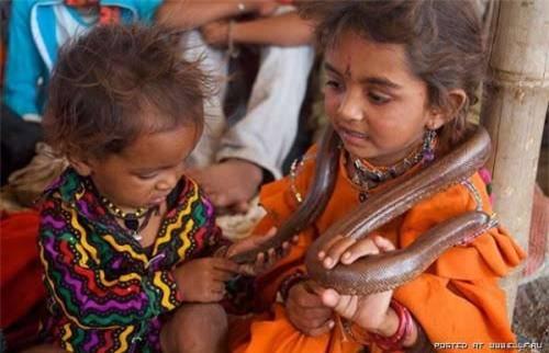 Trẻ em Ấn Độ coi rắn như bạn