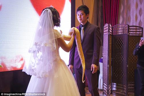 Thay vì nhẫn cưới, cặp đôi này chọn vật đính ước là đôi trăn khổng lồ vẫn còn sống