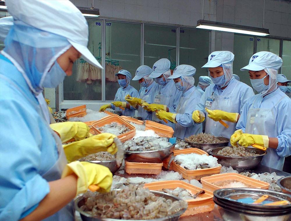 Các doanh nghiệp xuất khẩu tôm của Cà Mau đang gặp khó khăn do đầu ra ngày càng bị thu hẹp.