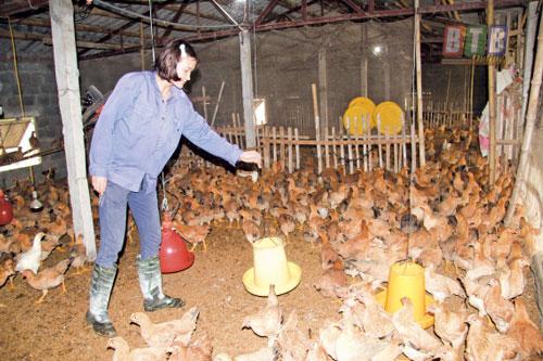 Thái Bình: Bỏ công nhân về làm 'triệu phú nông dân'