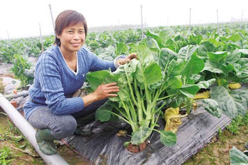 Chị Đặng Thị Cuối, Giám đốc HTX rau hữu cơ Cuối Quý (Ảnh Tư liệu)