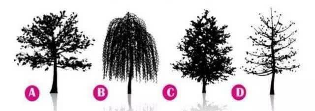 Bạn chọn cái cây nào?