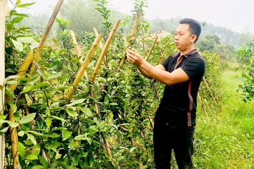 Tuyên Quang: Thanh niên làm giàu từ trang trại tổng hợp