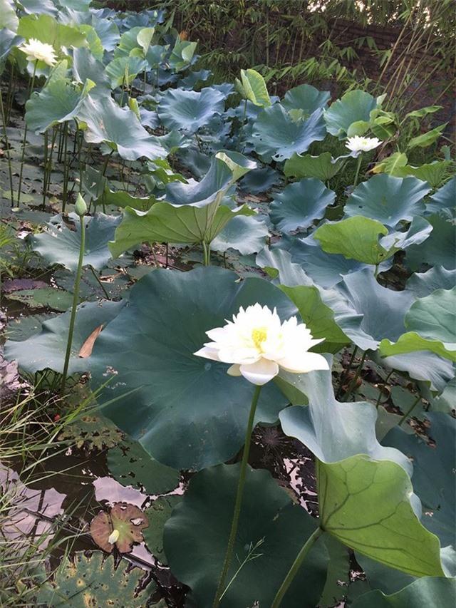 Nhà vườn 10.000m2 của nghệ sĩ Giang còi ngập hoa và trái cây - Ảnh 14.