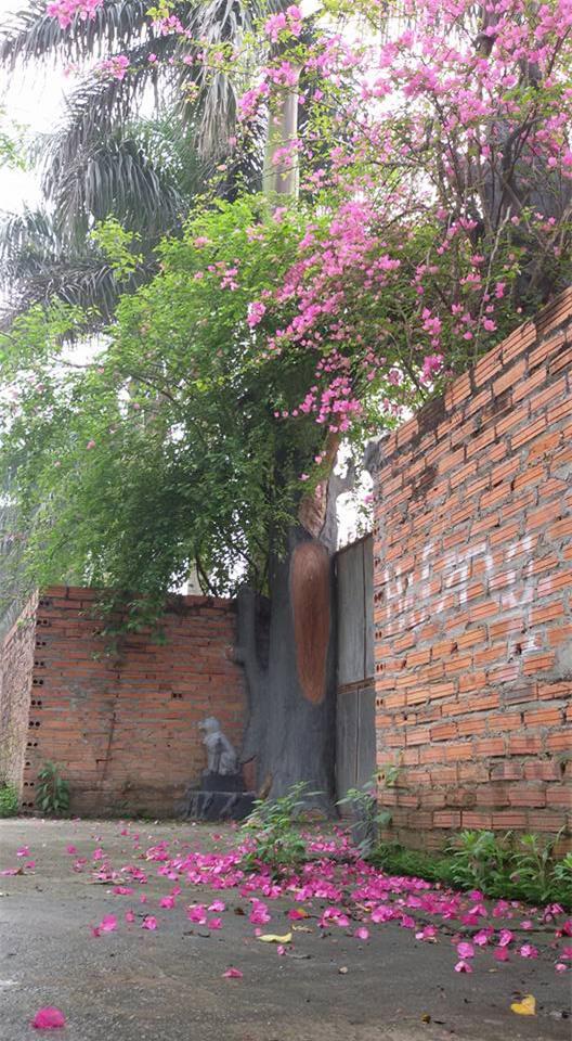 Nhà vườn 10.000m2 của nghệ sĩ Giang còi ngập hoa và trái cây - Ảnh 16.