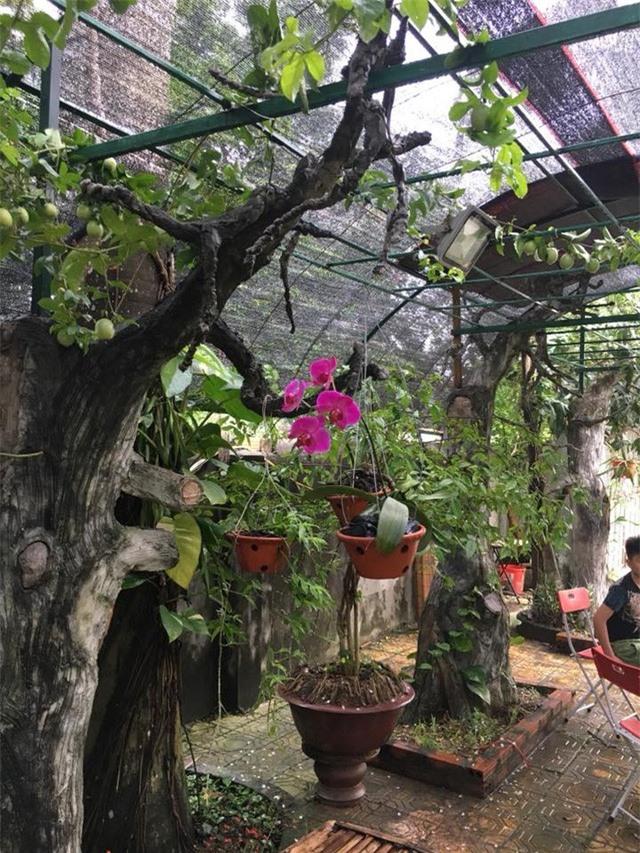 Nhà vườn 10.000m2 của nghệ sĩ Giang còi ngập hoa và trái cây - Ảnh 20.