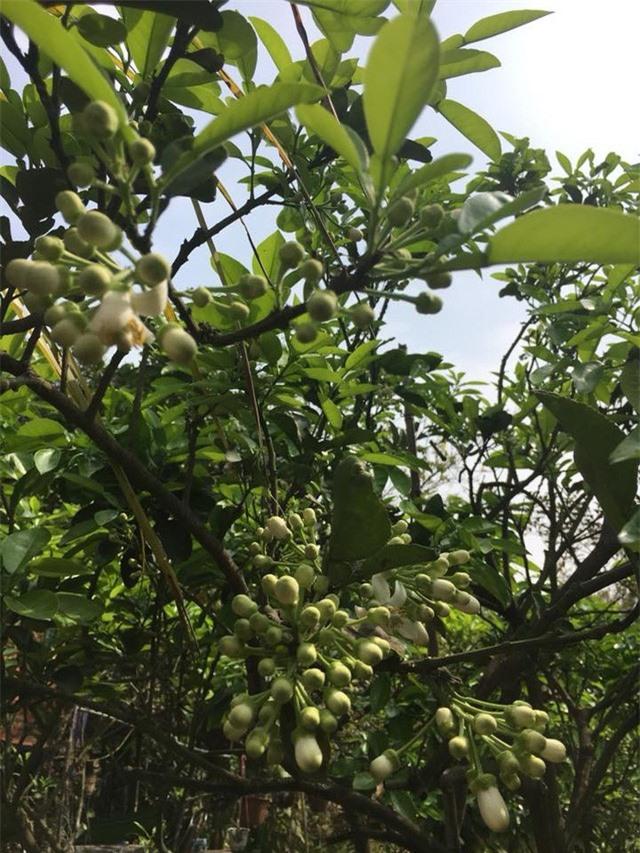 Nhà vườn 10.000m2 của nghệ sĩ Giang còi ngập hoa và trái cây - Ảnh 6.