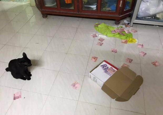 """Cô vợ phát hiện """"quỹ đen"""" của chồng nhờ chú mèo đánh rơi chiếc hộp."""