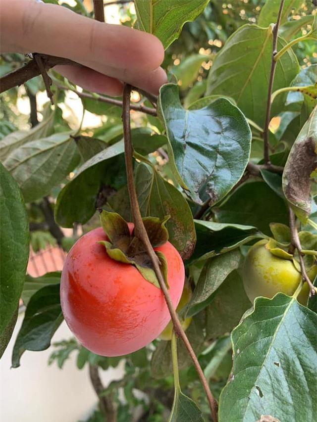 Khu vườn ngập hoa quả và rau xanh tại biệt thự của Hoa hậu Nguyễn Thị Huyền - Ảnh 17.