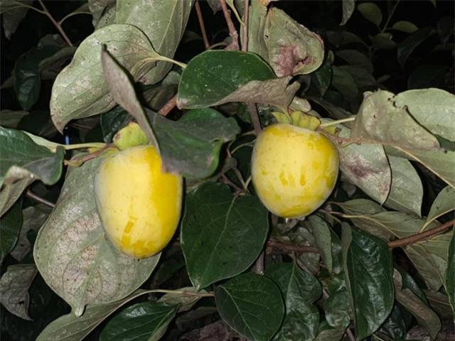 Khu vườn ngập hoa quả và rau xanh tại biệt thự của Hoa hậu Nguyễn Thị Huyền - Ảnh 18.