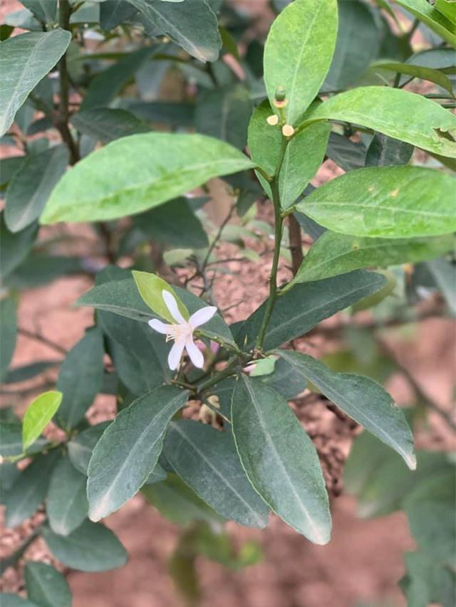Khu vườn ngập hoa quả và rau xanh tại biệt thự của Hoa hậu Nguyễn Thị Huyền - Ảnh 20.