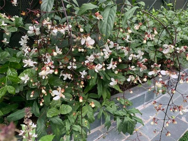 Khu vườn ngập hoa quả và rau xanh tại biệt thự của Hoa hậu Nguyễn Thị Huyền - Ảnh 21.