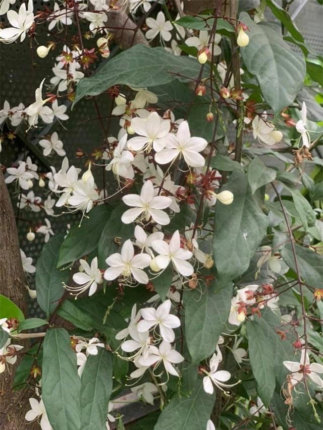 Khu vườn ngập hoa quả và rau xanh tại biệt thự của Hoa hậu Nguyễn Thị Huyền - Ảnh 22.