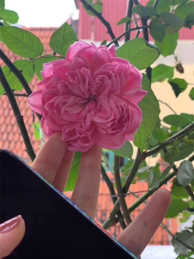 Khu vườn ngập hoa quả và rau xanh tại biệt thự của Hoa hậu Nguyễn Thị Huyền - Ảnh 5.