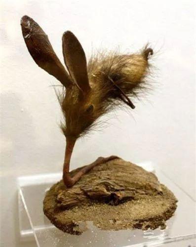 1001 thắc mắc: Loài động vật kì lạ nào có chân nhưng lại dùng mũi để di chuyển? - ảnh 2