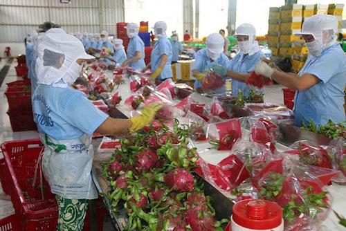 Xuất khẩu nông sản sang Trung Quốc lại gặp khó vì bị siết chặt giao dịch qua cửa khẩu (Ảnh: Tư liệu)
